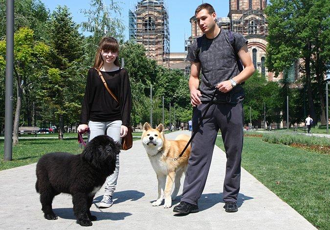 The Puppy Socialization Exposure Checklist