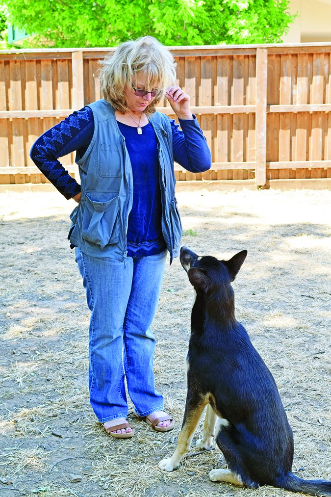 teaching eye contact to dogs