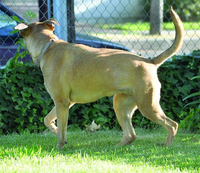 alert dog body language