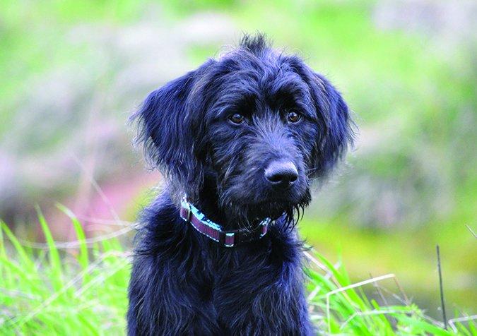 cute foster dog