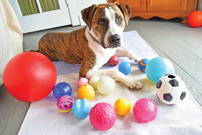 dog ball test reviews