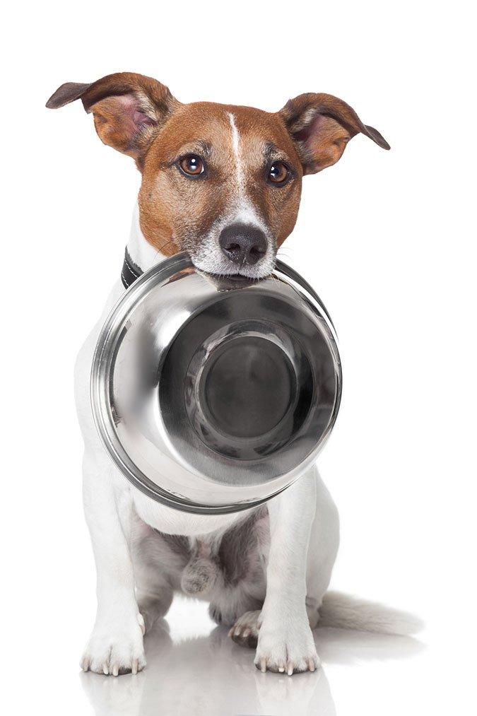 safe dog food bowls