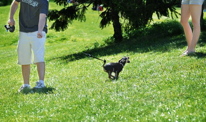 Reel It In – Why I Don't Like Retractable Leashes
