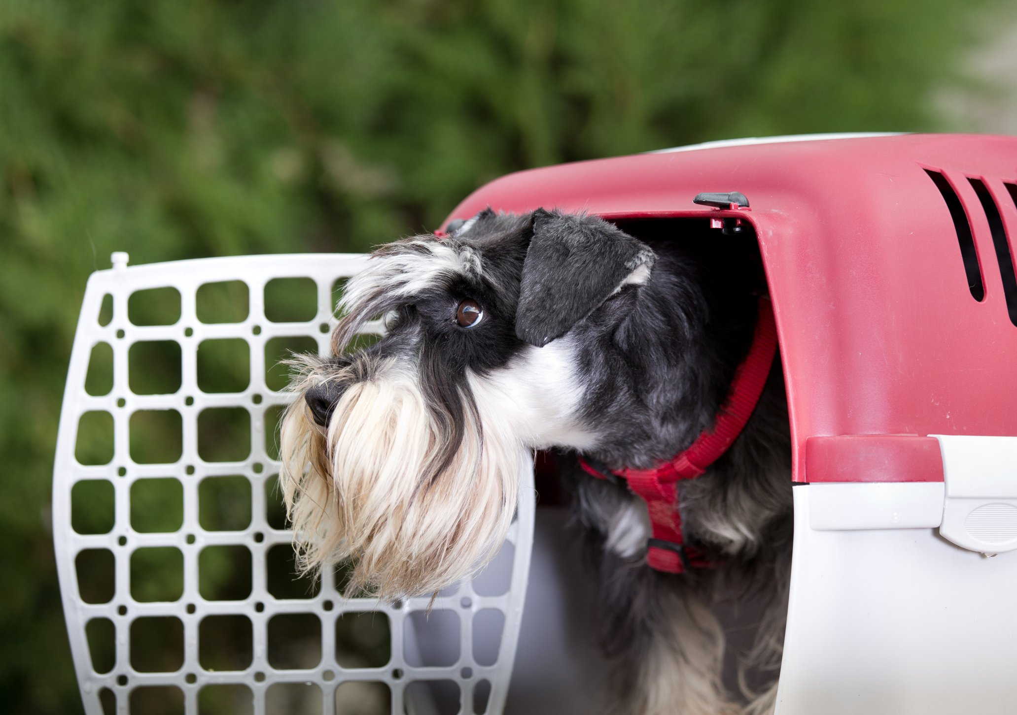 plastic portable dog crate