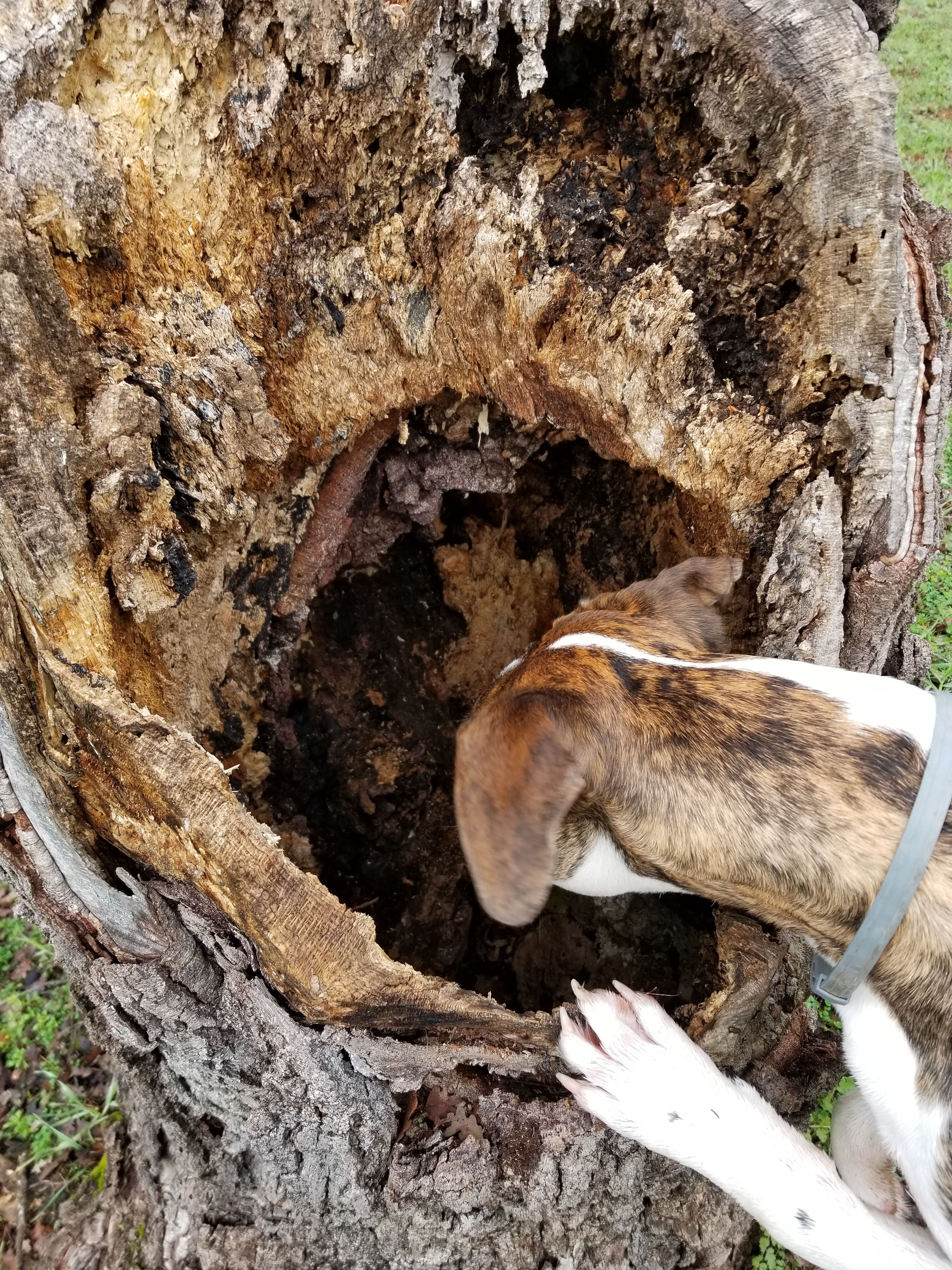 dog and tree stump