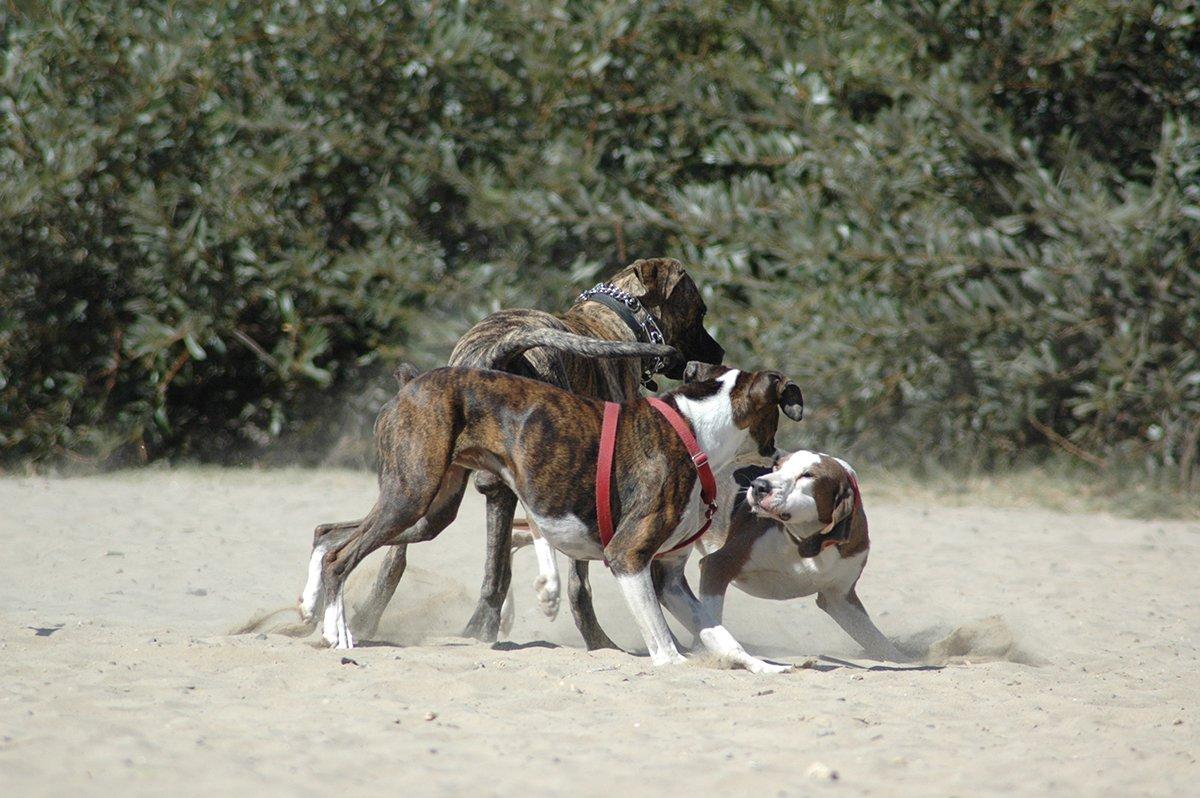 dog park fighting