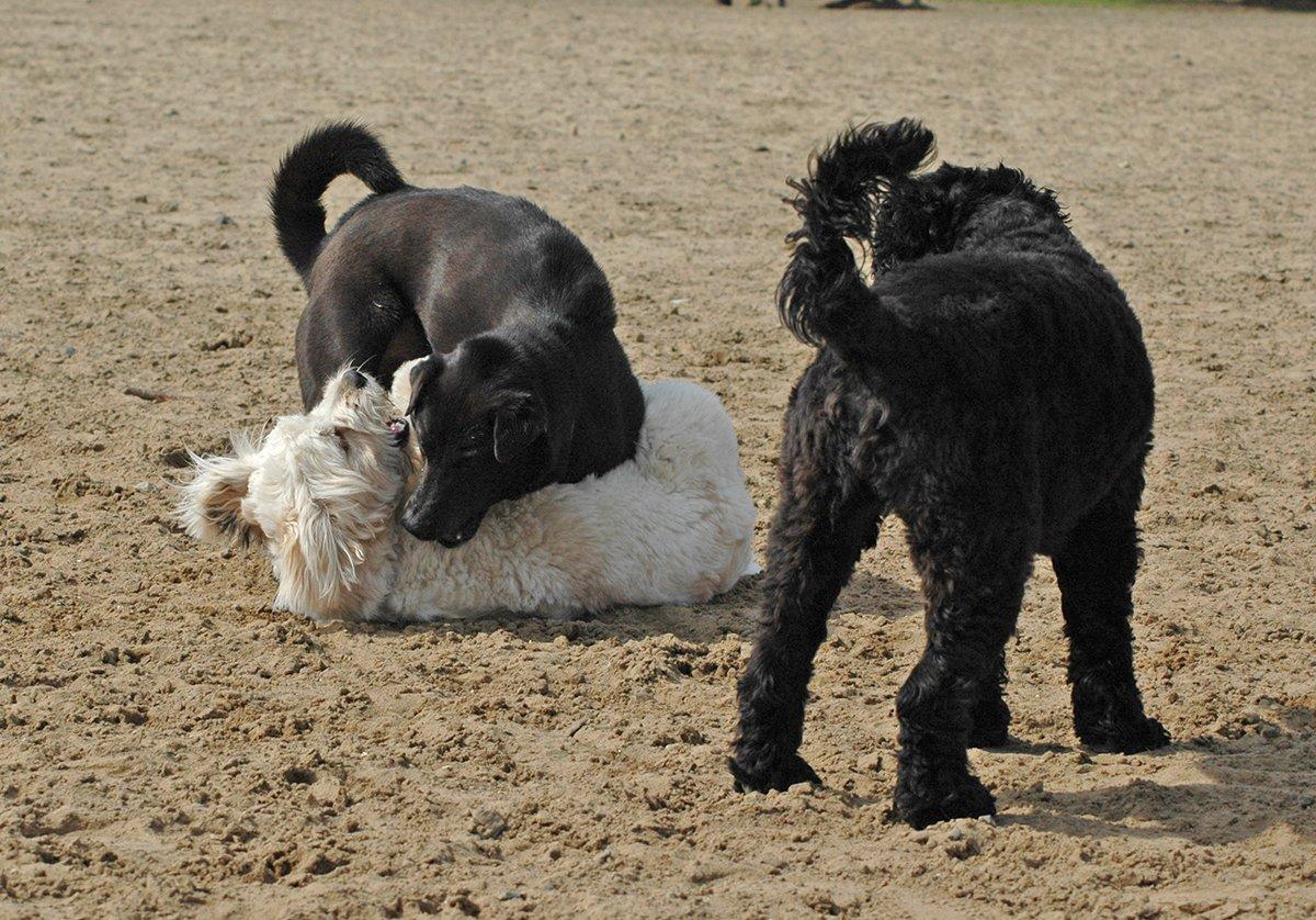 dog park bullies