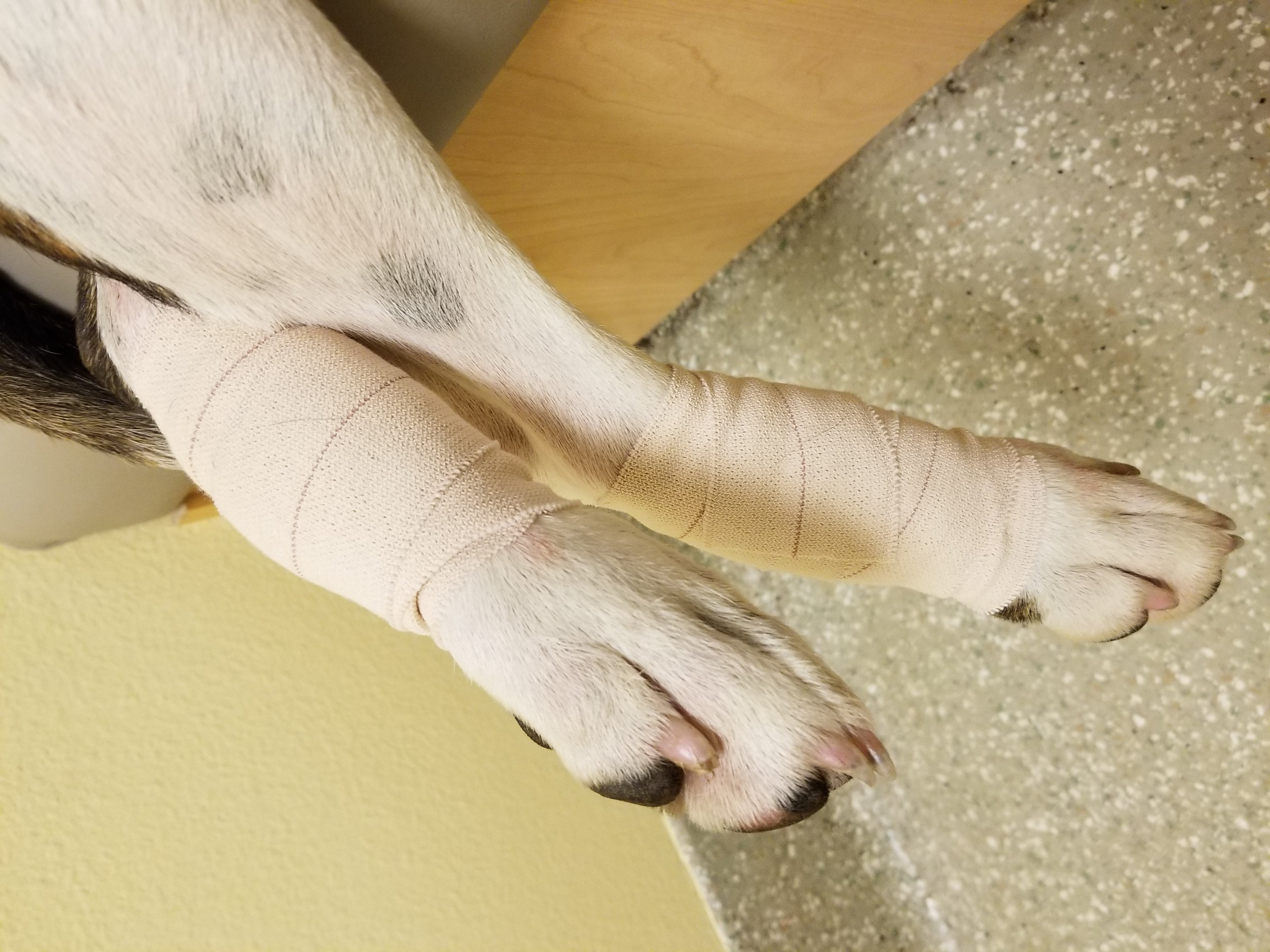 wounded dog legs