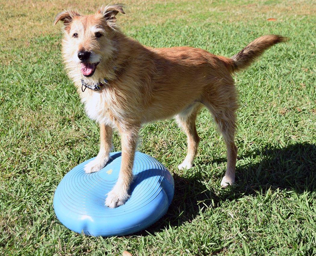 mixed breed dog otto