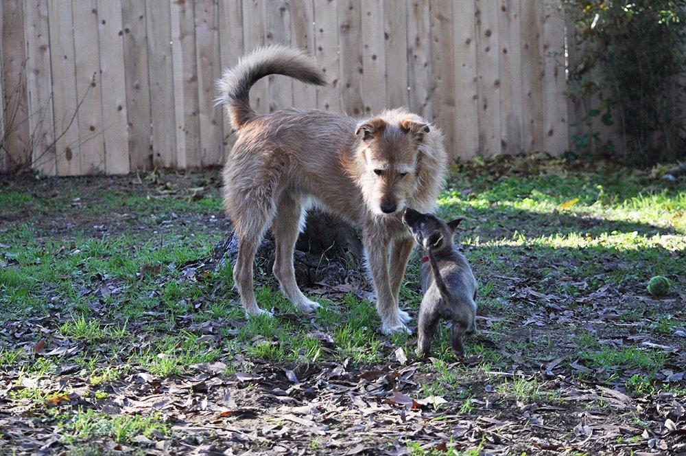 dog puppy greeting