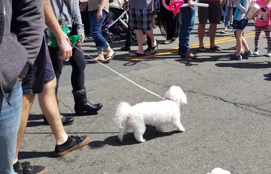 dog at the state fair
