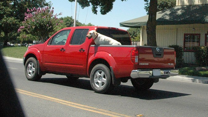 illegal to put dog in the back of pick up trucks