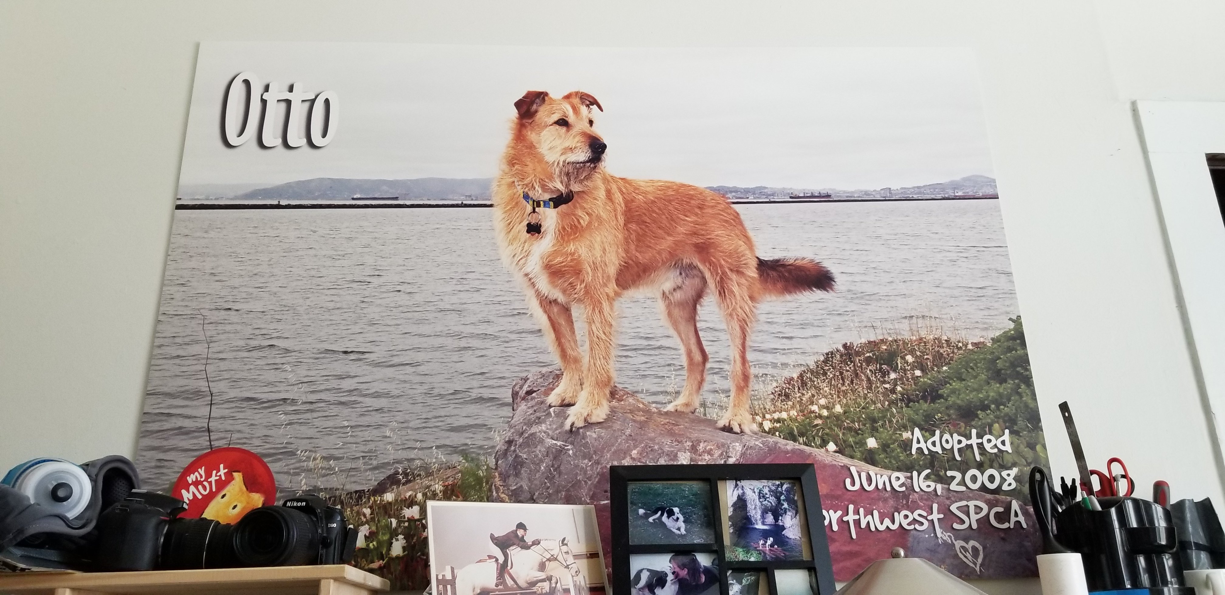 otto from whole dog journal