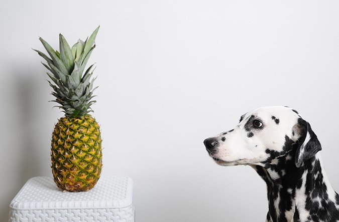 pineapple for dogs