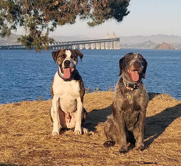 Skunked Again! But Maybe He's Learned His Lesson? - Whole Dog Journal