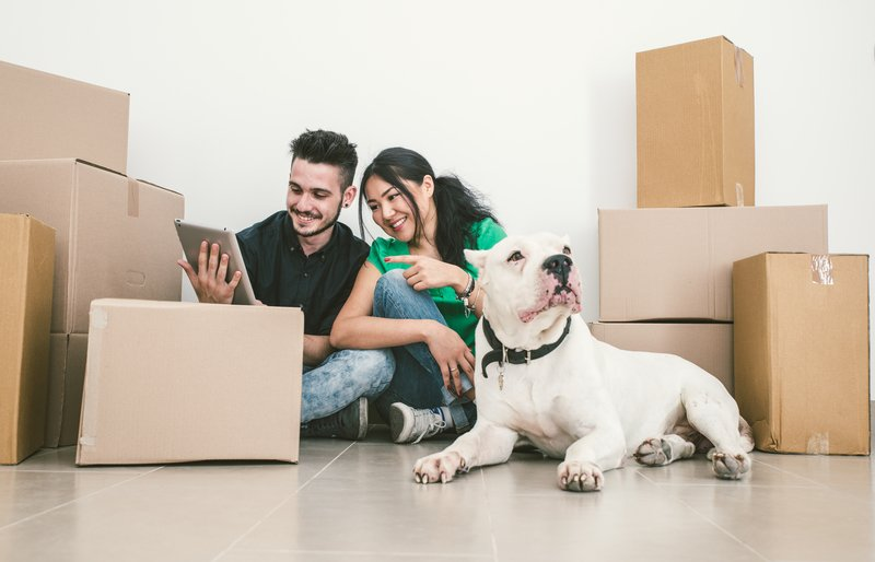 Moving with Dogs: Everything You Need to Know