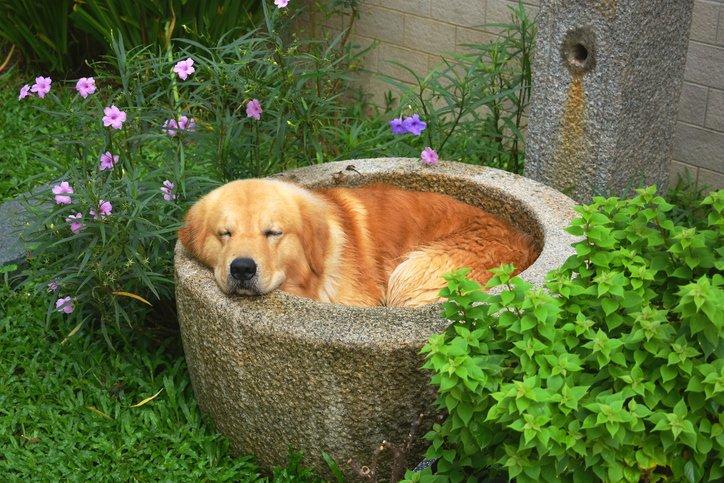 dog sleeping in outdoor tub