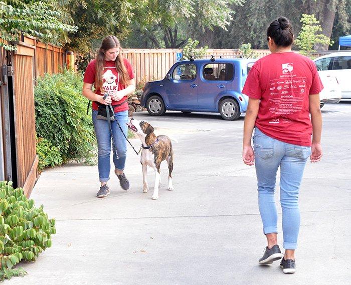 dog meet and greet training