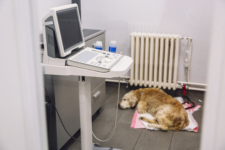 senior dog sleeping in vet hospital