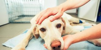 canine cancer patient