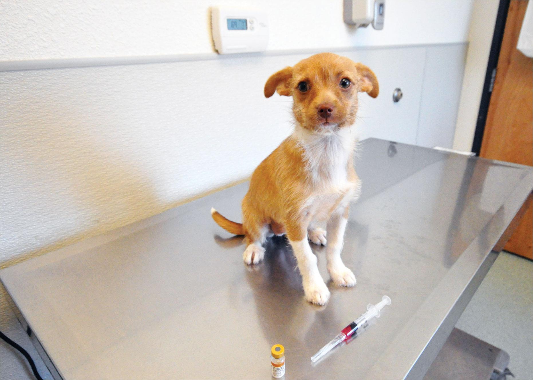 puppy titer tests