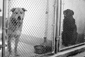 How To Choose The Best Shelter Dog for Your Family
