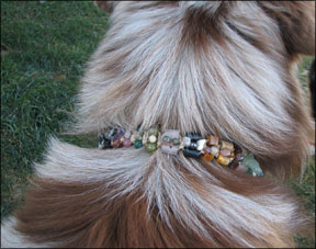 Dog Collar with Healing Crystals