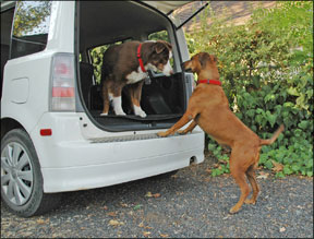 Planning A Road Trip with Your Dog? - Whole Dog Journal
