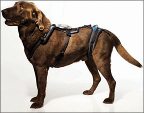 Help 'Em Up Harness from Blue Dog Designs