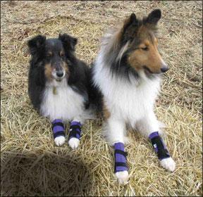 Canine Icer Carpal Wraps