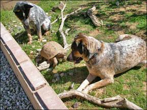 Canine Socialization