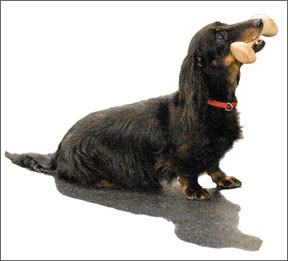 Competitive Dog Obedience