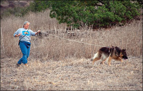 Canine Sport of Tracking
