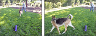 Predatory Dogs