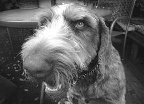 salve for dog nose