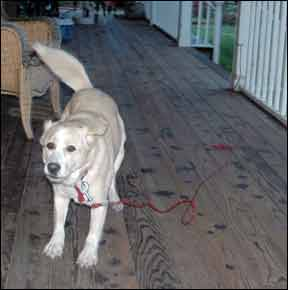 Canine Body Lanuage