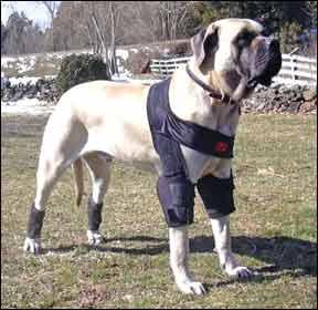 Standard Adjustable DogLeggs