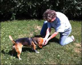 """Training Your Dog to Execute an """"Extremely Fast"""" Reliable Recall"""