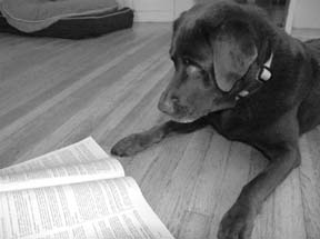 teaching a dog to read
