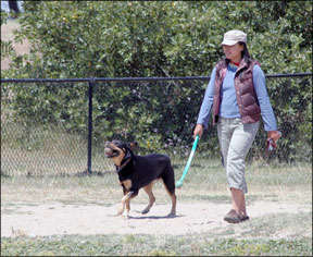 Benefits Of Exercising Your Dog