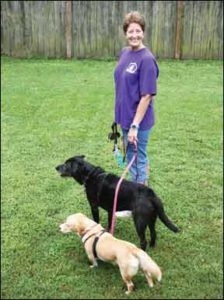How to Teach Loose Leash Walking to Your Dog