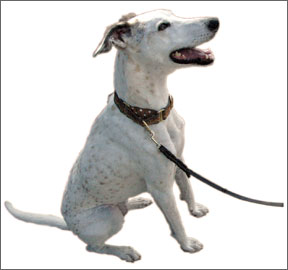 Increase Your Dog's Reliability