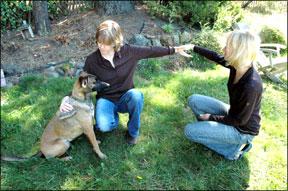 Canine Kinesiology