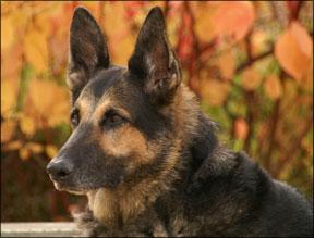 Holistic Dog Care
