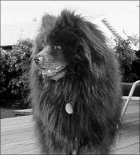 Whole Dog Journal - Healthy Older Dogs