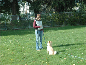 Teaching a Reliable Recall - Whole Dog Journal