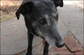 How to Care For an Older Dog