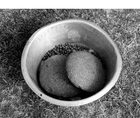 rocks in food bowl