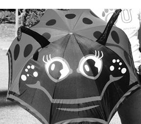 umbrella for blocking dog