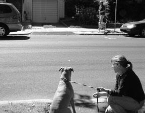 dog stress triggers